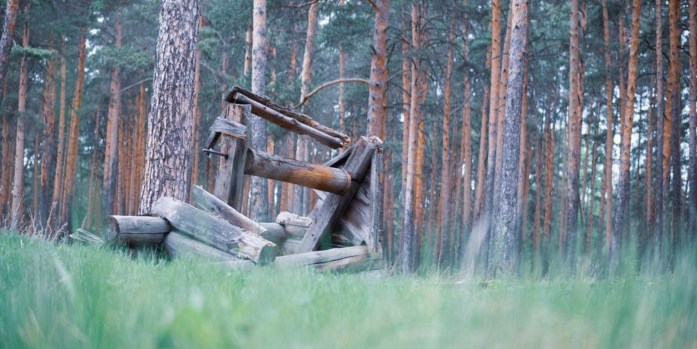 Rusty metal amidst trees on field in forest