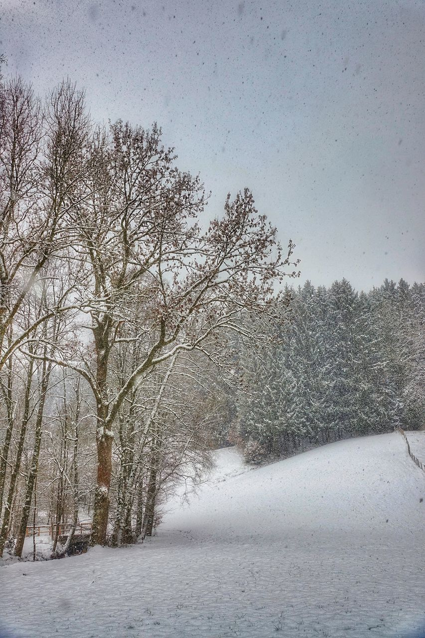 snow, cold temperature, winter, tree, plant, bare tree, beauty in nature, no people, scenics - nature, nature, tranquility, sky, covering, tranquil scene, frozen, day, white color, branch, land, outdoors, cold, snowing