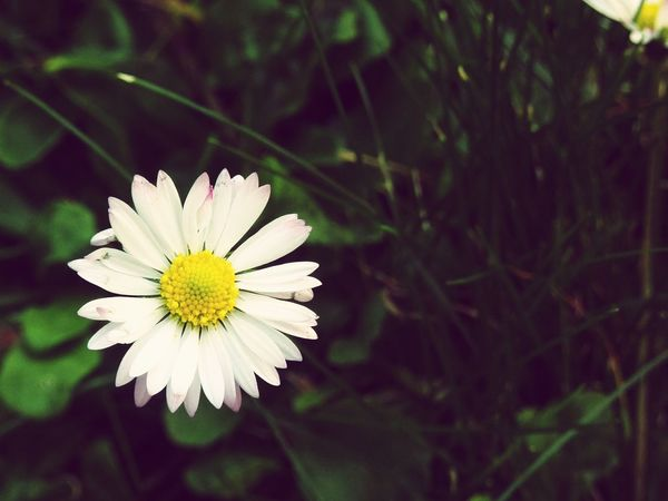 Flowrrs And Plants Picoftheday Simplicity The Week Of Eyeem EyeEm Nature Lover Nature_collection Nature Photography