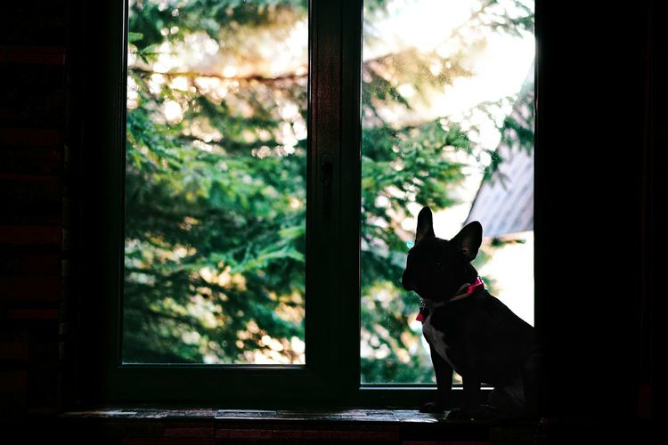 Dog looking through window