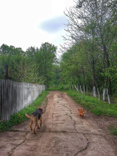 Dog amidst trees against sky