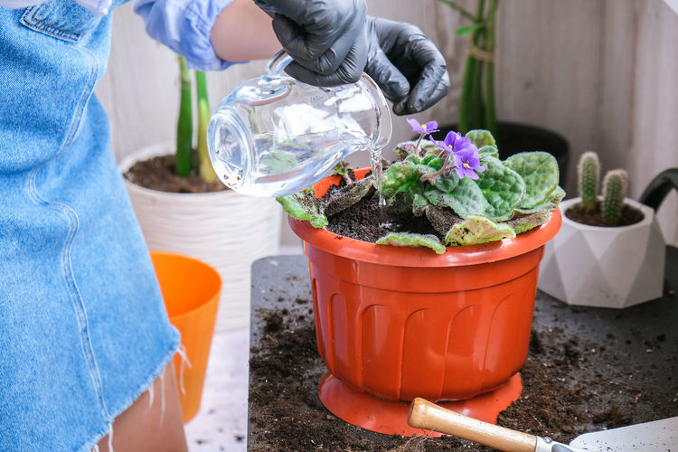 Midsection of person working on potted plant