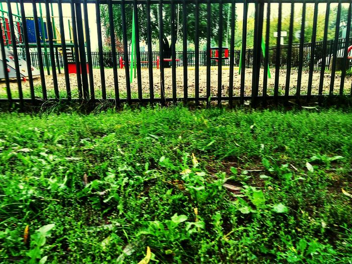 Green Color Grass Day Outdoors No People Sky Metal Fence Fence Swing Swings Sand Playground The Week On EyeEm EyeEmNewHere Playground Swing Growth Tree Safety Nature Bench Bench Trees