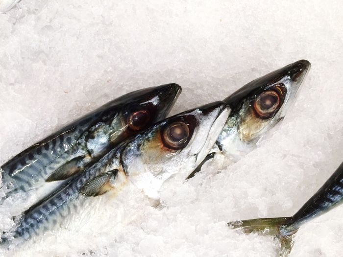 Mackerels Market Fish Food Market Diet Foods Animal Seafood Raw Food
