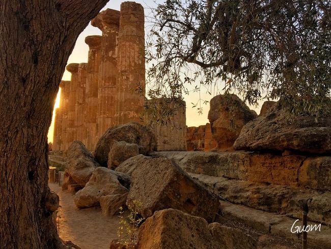 La luce trova sempre il modo di farsi notare. Light Sicily Agrigento Culumns Architecture History Built Structure Old Ruin Arch Travel Destinations Tree No People