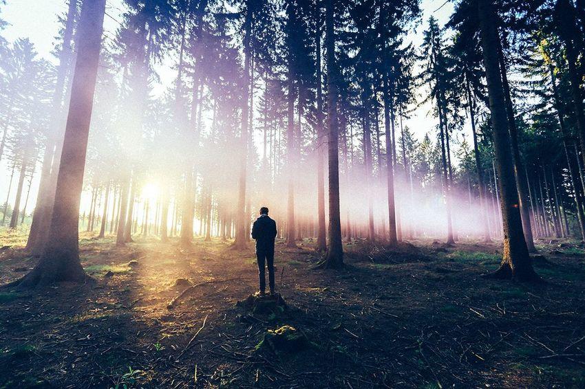 Fog Nature Smoke Bomb Landscape Saxony Forrest Vscocam