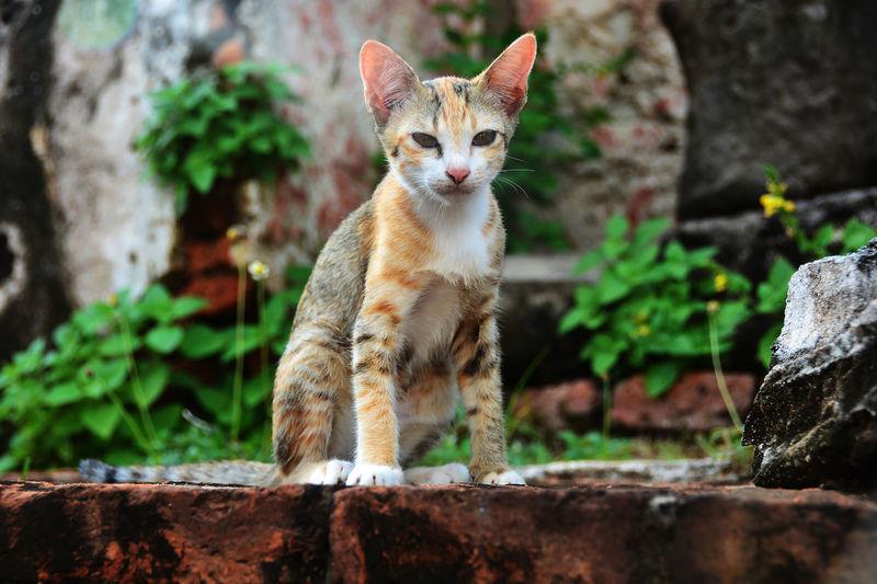 Little kitten sit wait for someone