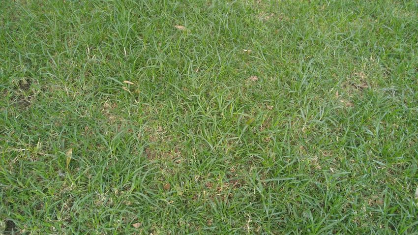 Close-up Field Grass Green Color Nature Soccer Field