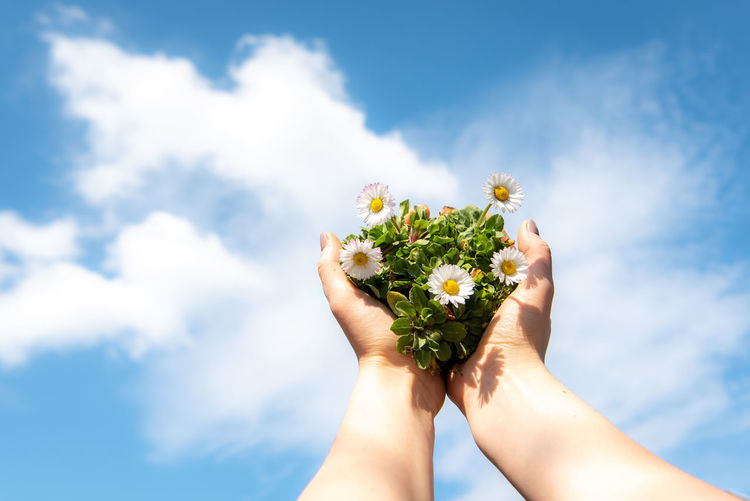 Midsection of person holding flowering plant against sky