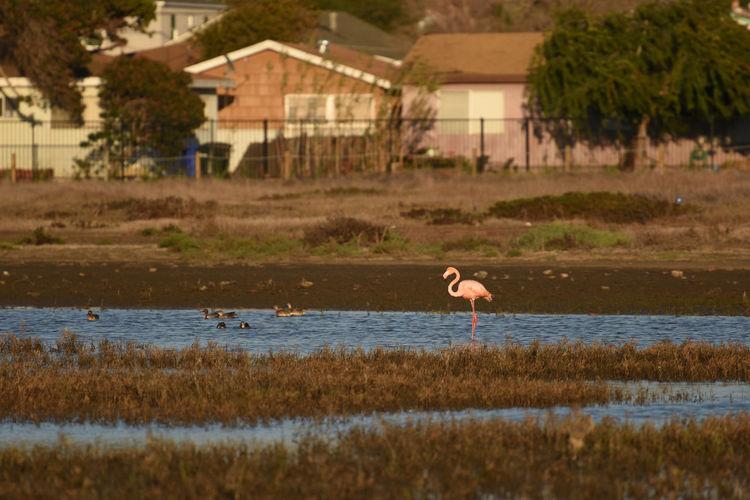 Flamingo Animal Animal Themes Animal Wildlife Animals In The Wild Bird Lake Lawn Ornaments Nature One Animal Outdoors Water
