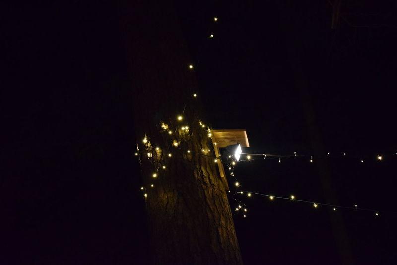 Christmas Dark Forest Illuminated Night Nightphotography Tree Weihnachtsmarkt Winter