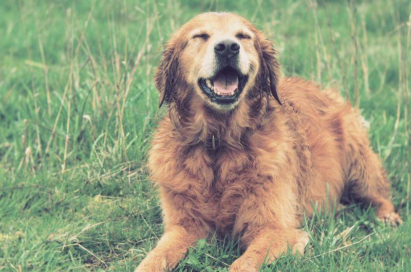 Things I Like I like her smile,it brings me smile Dogs Of EyeEm Dog❤