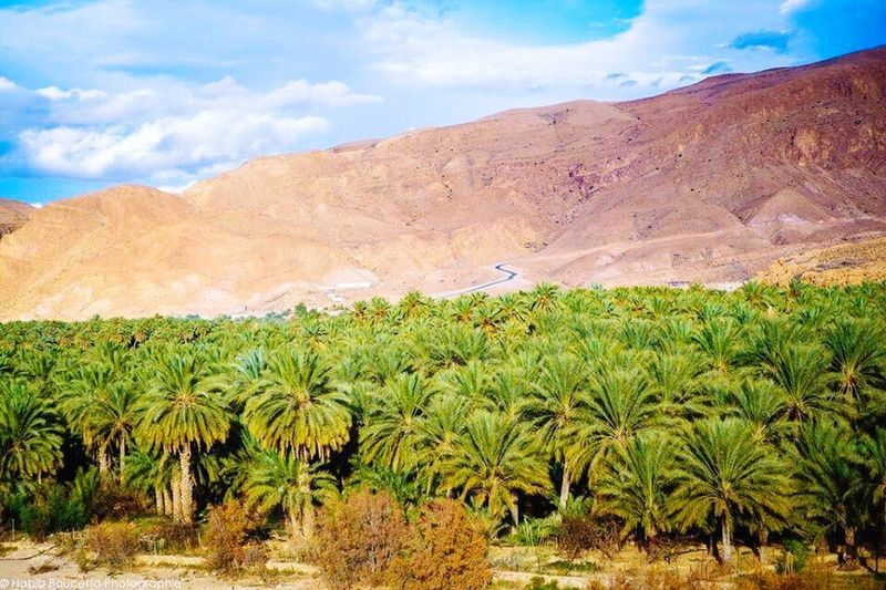 Biskra - Algérie 🇩🇿 Mountain Sky Tranquility Scenics Tranquil Scene Nature Beauty In Nature Cloud - Sky Landscape Day No People Outdoors Field Arid Climate Agriculture Mountain Range Biskra Biskra. Algeria. Sahara Of Algeria Algérie EyeEm Biskra.Algeria. EyeEm Best Shots EyeEm Nature Lover Beauty In Nature