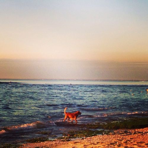 EyeEm Sunset Sea Photooftheday Dog