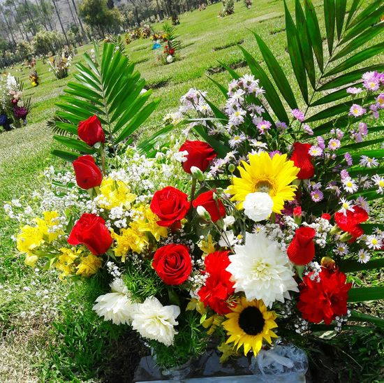 ⚘🌷 Flowers Roses🌹 Rose - Flower Cemetery Photography Photooftheday Beautiful Nature Flower Head Green Color Red Roses