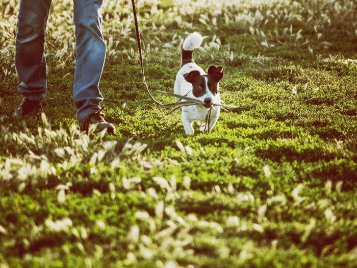 the deal Dog Dogs Of EyeEm Walking Unrecognizable Person Nature Low Section Human Leg Field Grass
