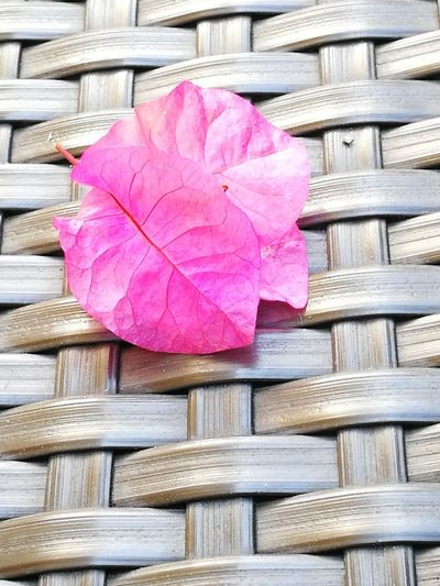 Light red leaf with woven background Pink Color Wood - Material No People Day Outdoors EyeEmNewHere Nature Close-up Freshness Beauty In Nature Flower Fragility Petal