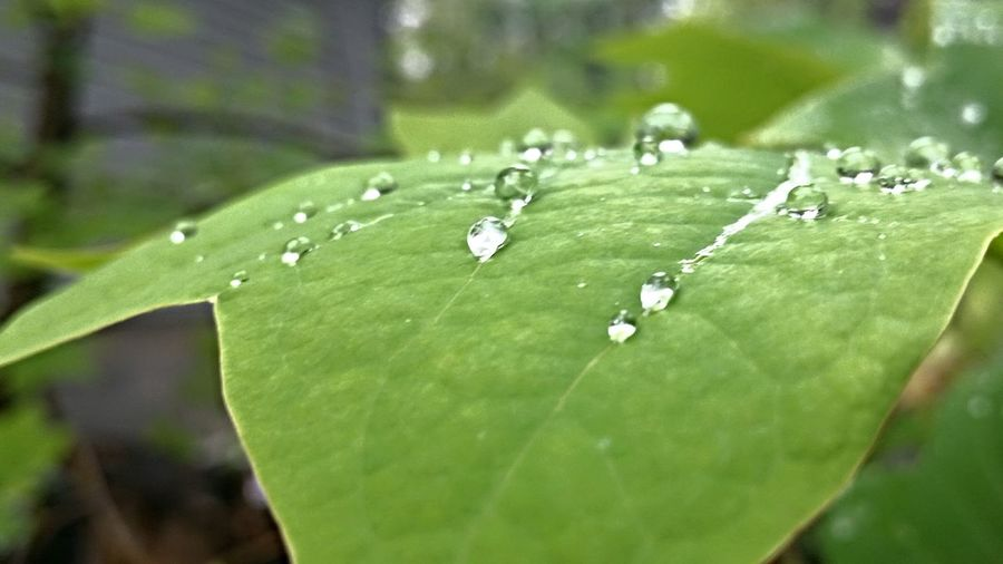 Water Drops On Petals. Water Drop Water Drops Water Droplets After The Storm After The Rain Nature Leafs Leaf 🍂 Water On Leaf Droplets Water Drops On Leaves