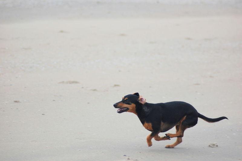 My Name Is... Joy Family❤ Dog DogLove Dogoftheday Dogs Life Beach Rescuedog Running Spanish Dog Love♡ Happy Family Freedom Sand