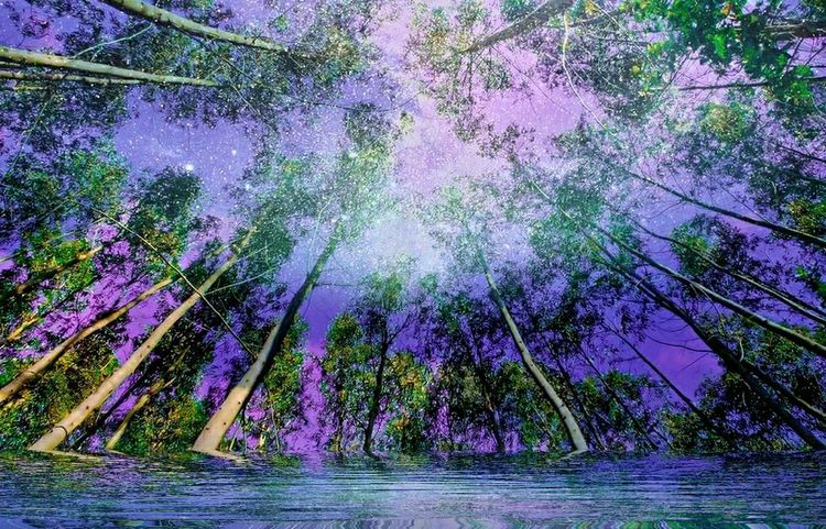 Tree Beauty In Nature Purple Nature Growth Outdoors Water No People Forest Branch Scenics Flower Sky Freshness Fragility Day Nightphotography Night Lights Night View Night Photography Art Photography Photo Editor Pro Fullcolor Photoshop Photographer