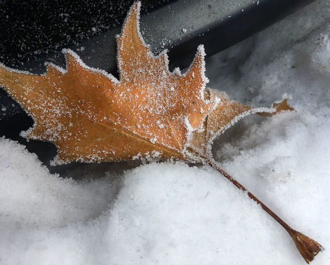 Close-up Day Frost Frosty Frozen Frozen Nature Leaf Leaves Nature Outdoors Snow Winter