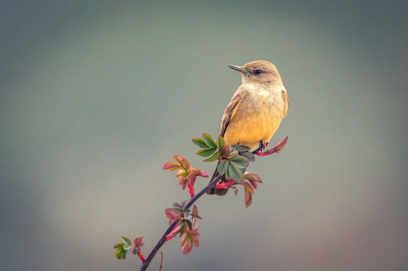 weight for rain EyeEm Selects Bird Perching Tree Flower Branch Portrait Songbird  Red Bare Tree Close-up