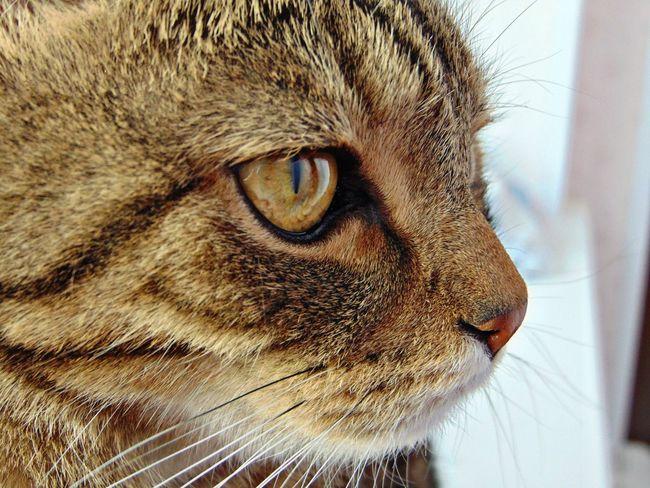 няша😺 Природа кот котэ Котик пупсик усатик