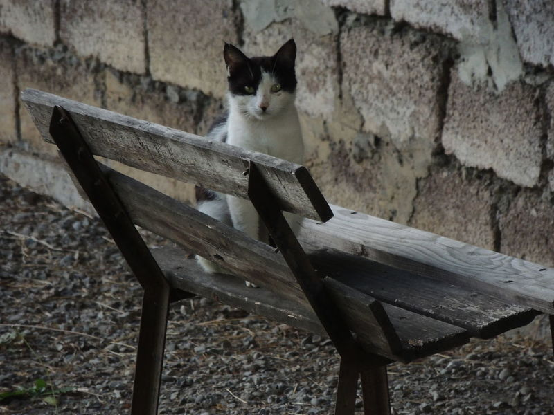 Animal Animal Themes Cat Day Domestic Domestic Animals Domestic Cat Feline Focus On Foreground Mammal No People One Animal Pets Relaxation Seat Sitting Stone Wall Vertebrate Wall Wall - Building Feature Wood - Material