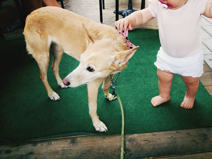 Baby Dog And Baby Pets Low Section Protruding Dog Human Hand Friendship Standing Babyhood