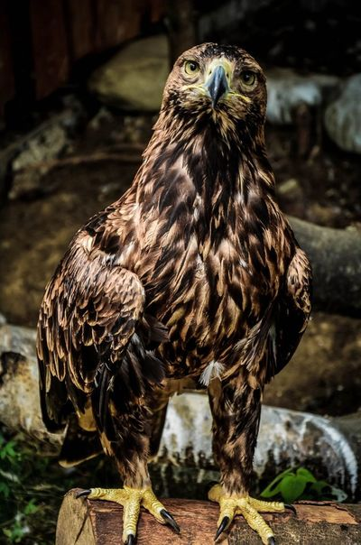 Animal Themes Bigbird Bird Day Eagle Looking At Camera Nature One Animal Standing Zoology