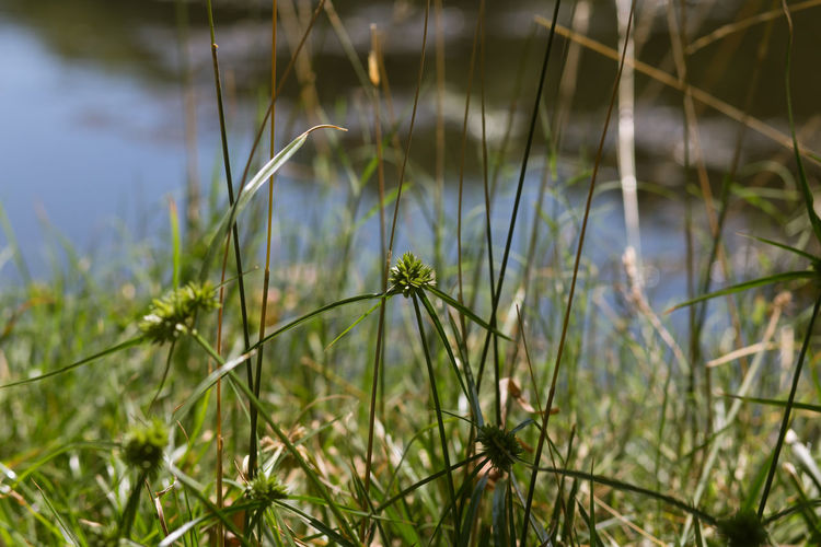 Close-up of plants against lake