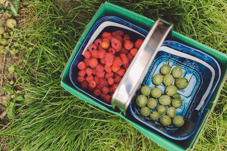 Directly Above Shot Of Gooseberries And Raspberries In Containers On Grassy Field