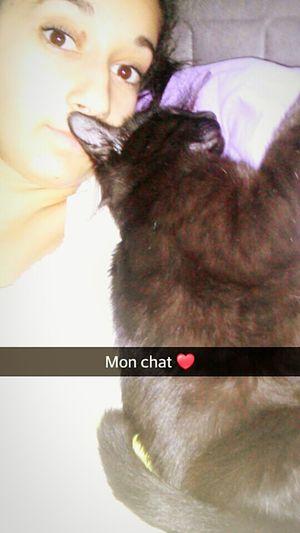 Mon Chat ♡ My Cat♥ Cat♡ Minou-Minou Selfie ✌ Miaou