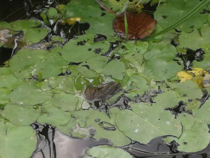 Frog Beauty In