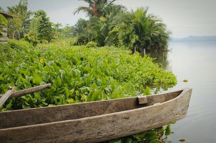 Traditional boat. Boat Tradition Centralsulawesi Tree Growth Scenics Nature No People Water Sky Green Color Beauty In Nature Tranquility Tranquil Scene Palm Tree Outdoors Day