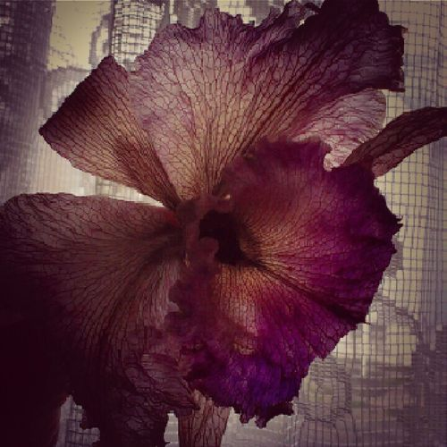 Beauty Of Decay The Fragile  Beautifully Flawed Flora Mortem