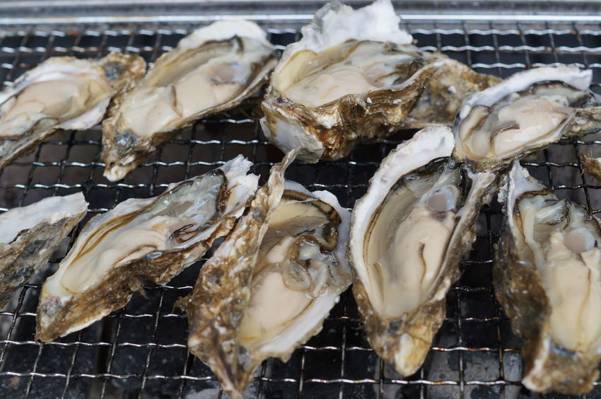 Oyster  Oysters カギ 厚岸 厚岸の牡蠣 牡蠣