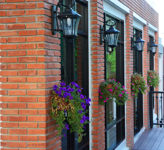 Potted plants on brick wall of building