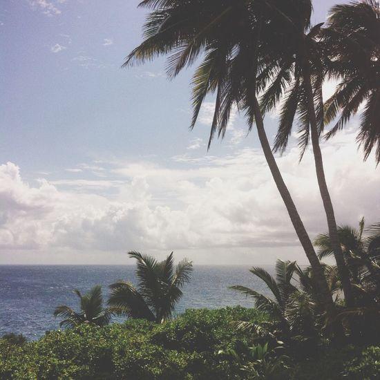 Christmasisland Ocean Coconut Trees Clouds