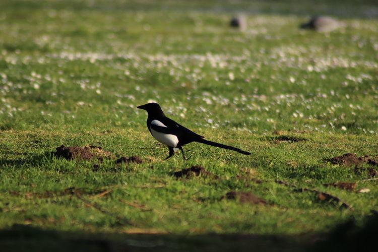 Bird on a field