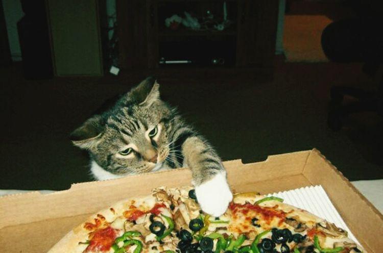 Alguien quiere pizza?