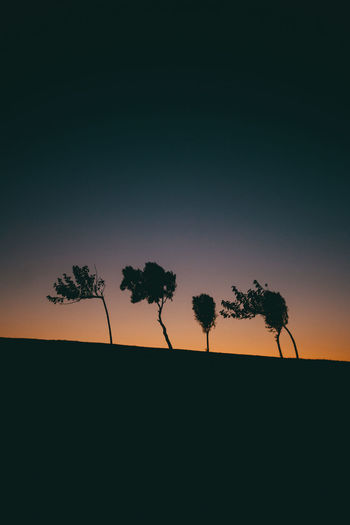 Trees upon a sunset Sky Tree Plant Silhouette Beauty In Nature Sunset Tranquility Environment Scenics - Nature No People Copy Space Nature Landscape Tranquil Scene Growth Land Outdoors Field Non-urban Scene Clear Sky