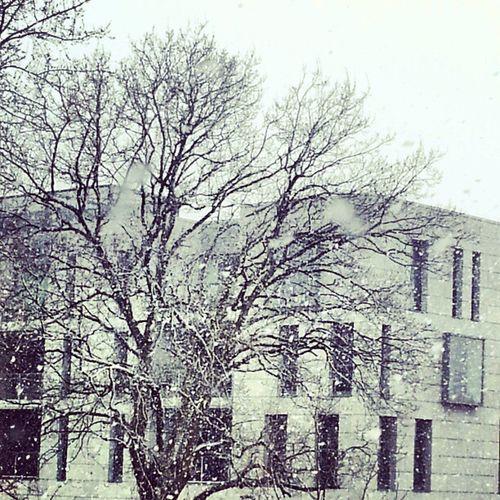Rhoon Rotterdam Niederlande Holland Schnee Snow Architektur modern nuture Natur Winter tree Baum