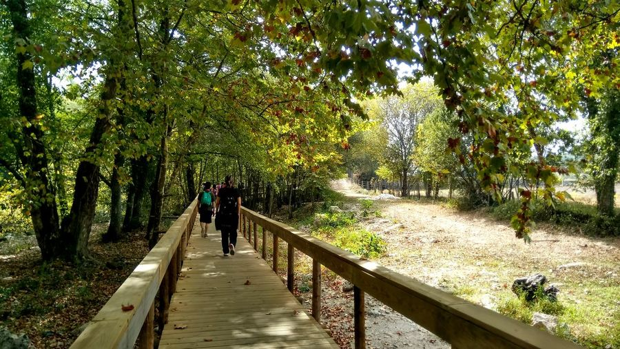 Rear view of people walking on boardwalk at forest