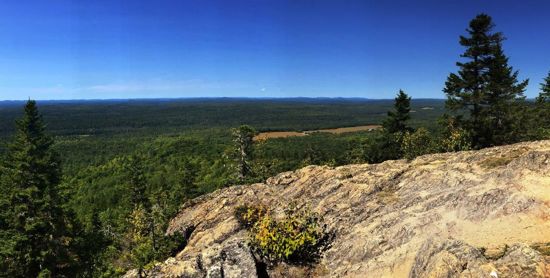 Haystack Mountain in the Maine north woods. Haystack Mountain View From Haystack Mountain Rocky Pine Tree Vista Maine North Woods Forest Tree Nature Tranquility Scenics Landscape Blue Beauty In Nature Tranquil Scene Growth Sky Outdoors Day No People Mountain Betterlandscapes