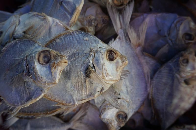 Saltedfish Vertebrate Animal Close-up Fish Market Animal Themes No People Seafood Wellbeing Group Of Animals For Sale High Angle View Healthy Eating Raw Food Food And Drink Food Retail  Day Animal Body Part Animal Head