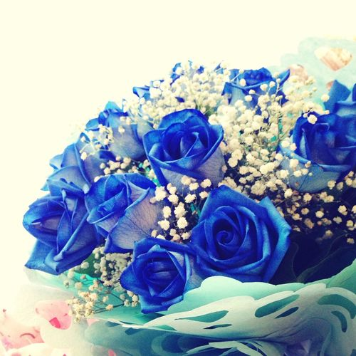 Blue roses <3