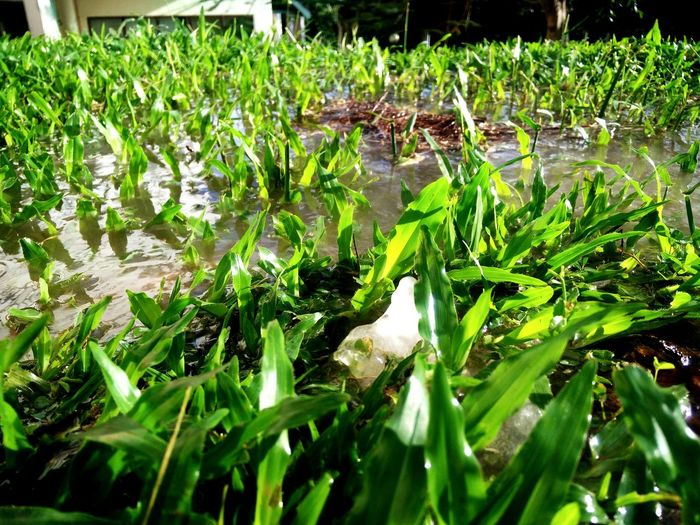 Pipe water overflow grass Growth Nature Water Green Color Leaf Plant Outdoors Grass Close-up