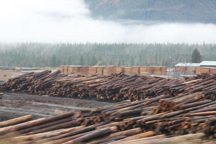 Industry Lumber