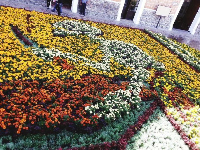 Arreglo Dia de muertos. Dia De Los Muertos Halloween Flowers, Nature And Beauty Flower Collection Flowers